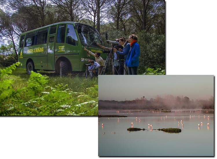 Doñana reservas. Visitas Guiadas 2