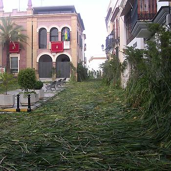 Corpus Christi Bonares