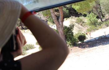 El corazón de Doñana sigue más vivo que nunca