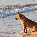 Las 7 playas que puedes llevar a tu perro en Huelva
